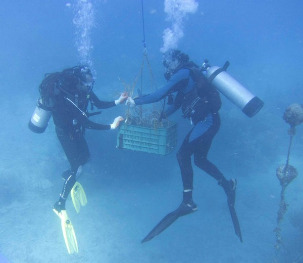 Tallaboa Puerto Rico  city pictures gallery : Coral Nurseries Reviving more Reefs | Aquarium Tip Tank