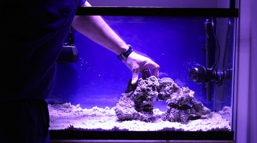 Aquarium and tropical fish tank tips tricks podcast for How to start a saltwater fish tank