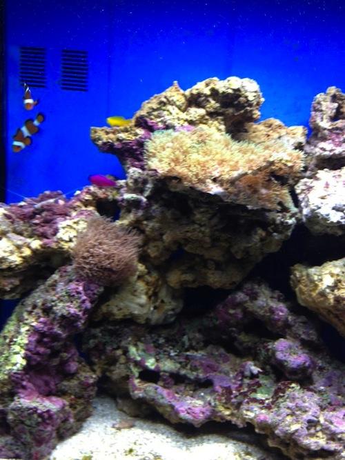 Diligent Wave Maker Aquarium Fish Tank Powerhead Pump Marine Reef Coral Filter Pet Supplies Free Del